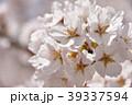桜 花 春の写真 39337594