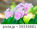 花 咲く 植物の写真 39339881