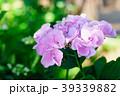 花 咲く 植物の写真 39339882