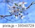 桜 開花 アップ 数輪 青空 39340729