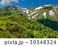 新緑の稜線を行く登山者と残雪の平標山 39348324