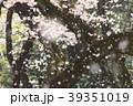 花吹雪 さくら 花びらの写真 39351019
