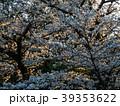 桜 晴れ 39353622