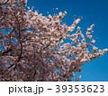 桜 晴れ 39353623