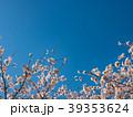 桜 晴れ 39353624