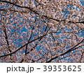 桜 晴れ 39353625