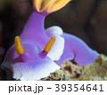 沖縄ダイビング 39354641