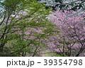 開花 39354798