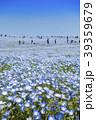 花畑 ネモフィラ みはらしの丘の写真 39359679