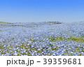 花畑 ネモフィラ みはらしの丘の写真 39359681