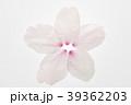桜の花びら 39362203