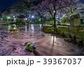 桜 ソメイヨシノ 花筏の写真 39367037
