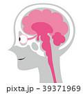 脳の断面イメージイラスト ボディグレー 39371969