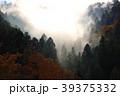 霧と森 39375332