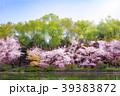 満開の桜と水辺 39383872