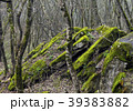 Landscape with boulders in the forest 39383882