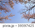 桜 39397425