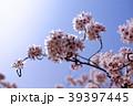 桜 39397445