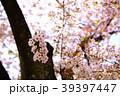 桜 39397447