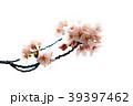 桜 小枝 39397462