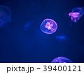 アクアリウム 水族園 水族館の写真 39400121