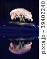 水戸野シダレサクラ 39402240