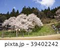 臥龍桜 39402242