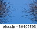 木 ツリー 樹 39409593