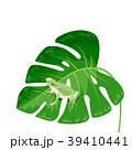 葉っぱに止まるカエル 39410441