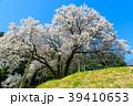 納戸料の百年桜 【佐賀県嬉野市】 39410653