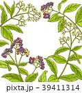 背景 胡椒の実 葉のイラスト 39411314