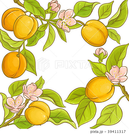 apricot vector frame 39411317