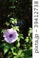 花 フラワー お花の写真 39412738