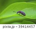 生物 クリーチャー 生き物の写真 39414457