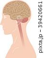 脳 横向き 脳みそのイラスト 39420661