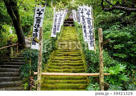 鎌倉 杉本寺 苔の石段 39421329