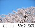 花 桜 春の写真 39421503