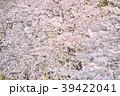 花 桜 春の写真 39422041