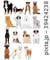 ベクター 動物 犬のイラスト 39424238
