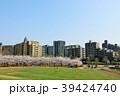春 桜 桜並木の写真 39424740