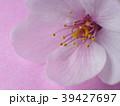 桜マクロ撮影 39427697