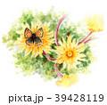 タンポポ シジミチョウ 白バックのイラスト 39428119
