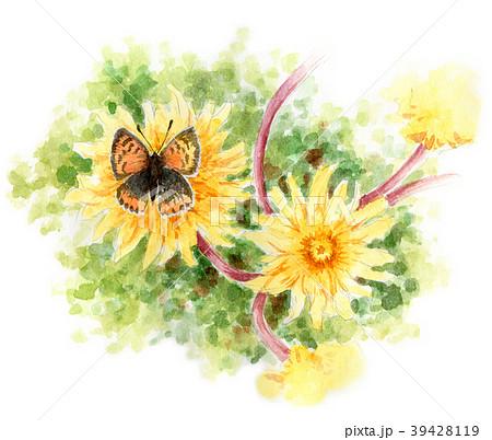 水彩で描いたタンポポにとまるシジミチョウ 39428119