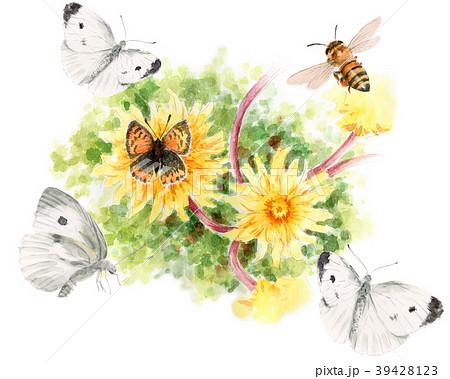 水彩で描いたタンポポと虫たち 39428123