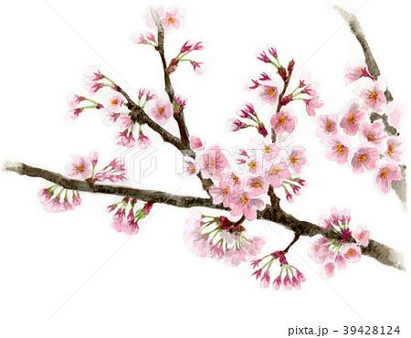 水彩で描いたソメイヨシノの枝と花 39428124