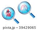 医療 心臓 肺のイラスト 39429065