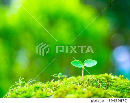 植物の芽生え 39429677