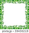 パセリ オランダゼリ 区域のイラスト 39430219