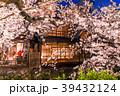 祇園白川 夜桜 桜の写真 39432124