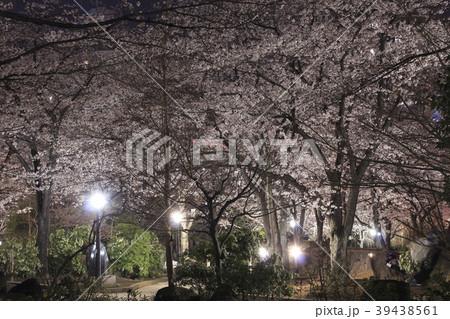 川口西公園(リリアパーク)の夜桜ライトアップ 39438561